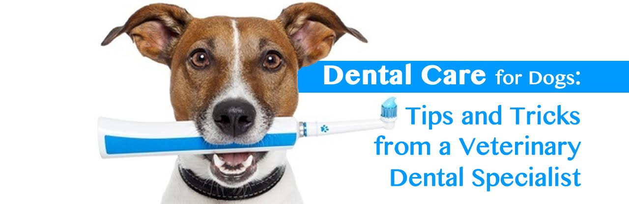 Dental Care for Dogs:  Tips and Tricks from a Veterinary Dental Specialist