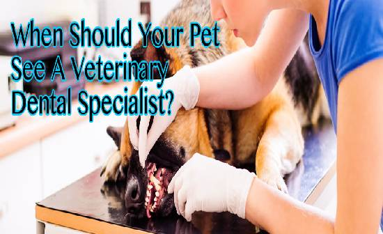 When Should Your Pet See A Veterinary Dental Specialist?
